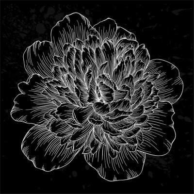 Pixerstick till Allt Vacker svart och vit pion blomma isolerad på bakgrund. Handritade konturlinjer och stroke.