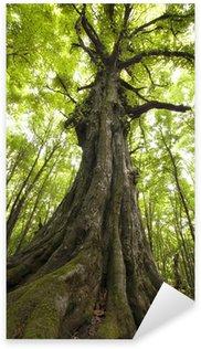 Pixerstick till Allt Vertikala foto av ett gammalt träd i en grön skog
