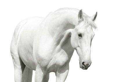 Pixerstick till Allt Vit häst hög nyckel