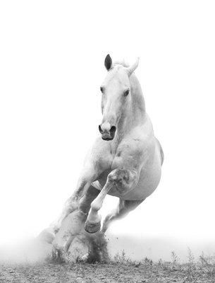 Pixerstick till Allt Vit häst