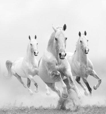 Pixerstick till Allt Vita hästar i damm