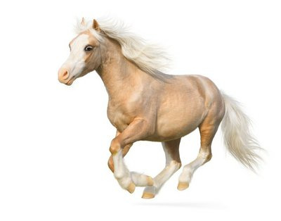 Pixerstick till Allt Welsh ponny galopper