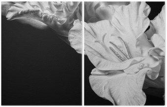 Díptico Gladiolo blanco y negro