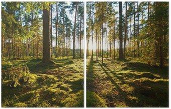 Díptico La salida del sol en el bosque de pinos