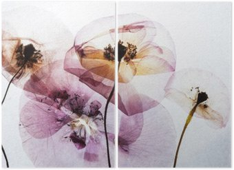 dry poppies Diptych