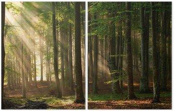 Diptyk Höst skog träd. natur grön trä solljus bakgrunder.