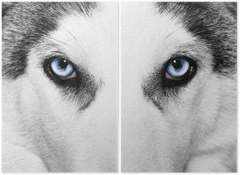 Diptyque Gros plan de chien husky