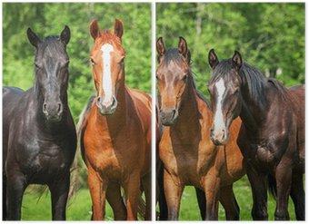 Diptyque Groupe de jeunes chevaux sur le pâturage