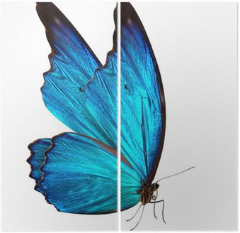Diptyque Papillon macro fond