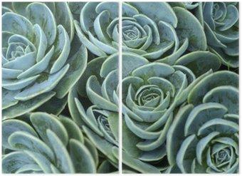 Diptyque Plante grasse