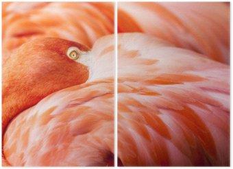 Diptyque Plumes Flamingo - Fond rose Oiseau avec la tête cachée sur Feathers