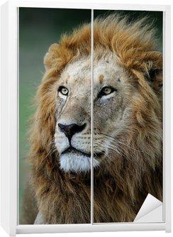 Dolap Çıkartması African Lion