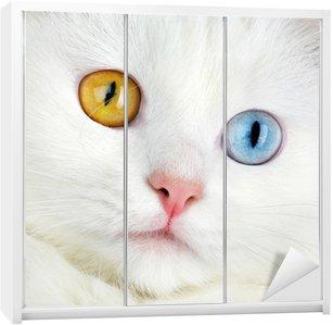 Dolap Çıkartması Bir varicoloured gözler beyaz kedi portre ...