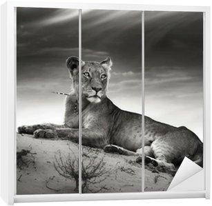 Dolap Çıkartması Çöl kumul Lioness