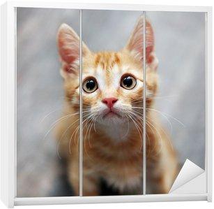 Dolap Çıkartması Zencefil kedi yavrusu