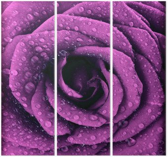 Drieluik Paars donker rose achtergrond