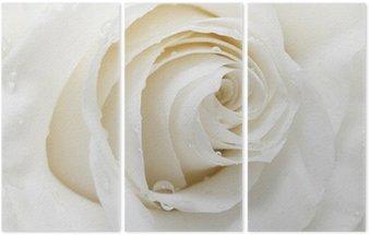 Drieluik White Rose