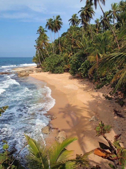 Plakat HD Drzew kokosowych odcienie na dziewiczej plaży - Tematy
