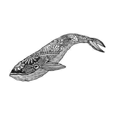 Duvar Çıkartması Balina, Vektör zentangle baskı, yetişkin boyama. El, sanatsal süs desenli illüstrasyon çizilmiş. Deniz Hayvan koleksiyonu. Eskiz, dövme, poster, tişört tasarımı.