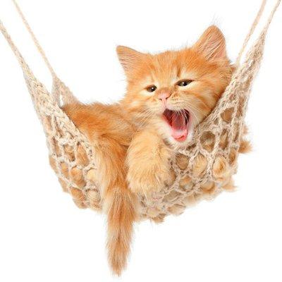 Duvar Çıkartması Hamak sevimli kızıl saçlı kedi yavrusu