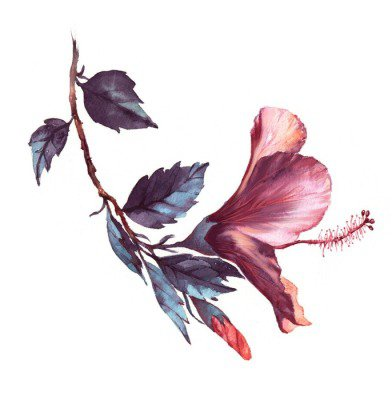 Duvar Çıkartması Pembe ebegümeci çiçeği beyaz ihale elle çizilmiş suluboya çiçek illüstrasyon. Doğal çizim beyaz arka plan üzerinde izole edilmiştir. Romantik çiçek