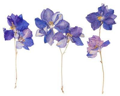 Duvar Çıkartması Preslenmiş çiçekler, izole