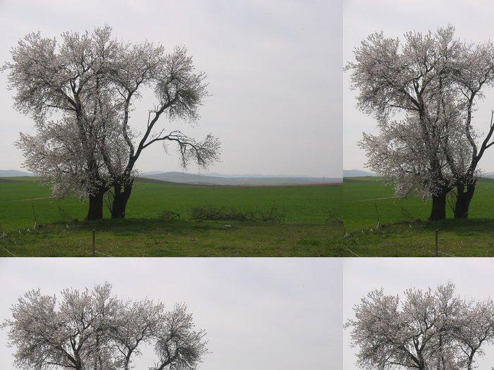 Vinil Duvar Kağıdı Almendro2 - Diğer manzaralar