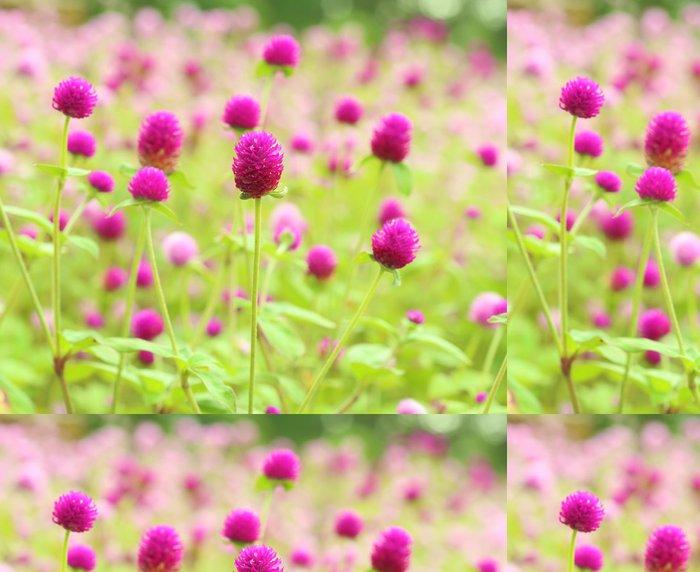 Vinil Duvar Kağıdı Küre amaranth veya Gomphrena globosa'dır çiçek - Çiçekler