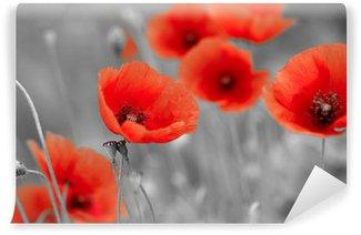 Vinil Duvar Resmi S / b alanında kırmızı gelincikler
