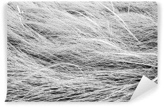Vinil Duvar Resmi Siyah ve beyaz fotoğraf, uzun çim saha doku backgrou yukariya