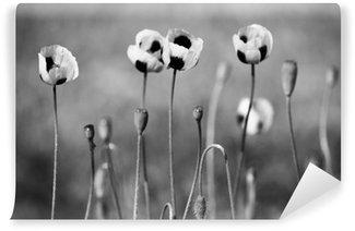 Vinil Duvar Resmi Siyah ve beyaz gelincik çiçekleri