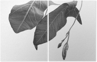 Dyptyk Czarno-biały macrophoto obiektu roślinnego z głębi pola