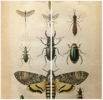 Dyptyk Histoire naturelle: Les insectes