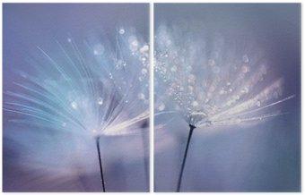 Dyptyk Piękne krople rosy na makro z nasion mniszka. Piękne niebieskie tło. Duże złote krople rosy na dandelion spadochronem. Soft marzycielski przetargu formą artystyczny wizerunek.