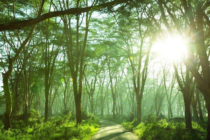 Obraz na Płótnie Dżungla - iStaging