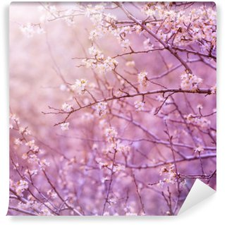 Vinyl Fotobehang Bloesem van de kersenboom