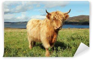 Vinyl Fotobehang Close-up van Schotse hoogland koe in het veld