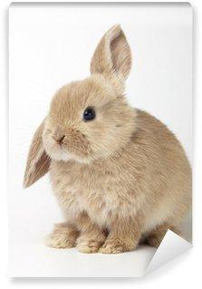 Vinyl Fotobehang De baby van oranje konijn op witte achtergrond