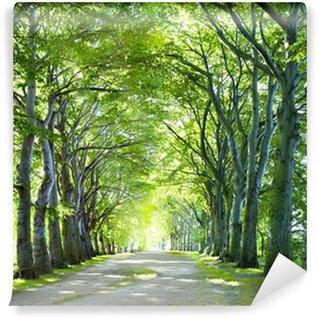 Vinyl Fotobehang De weg in het bos