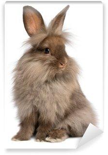 Vinyl Fotobehang Een leuke zittende chocolade lionhead konijn