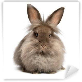 Vinyl Fotobehang Een liggende chocoladekleurige lionhead konijn
