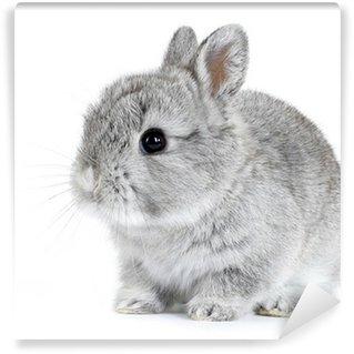 Vinyl Fotobehang Grijs konijn bunny baby geïsoleerd op witte achtergrond