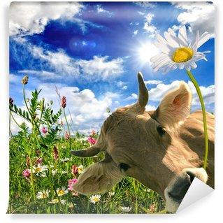 Vinyl Fotobehang Happy birthday: Koe geeft een bloem :)