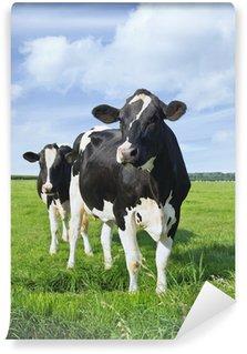 Vinyl Fotobehang Holstein-Friesian koeien in een groene Nederlandse weide