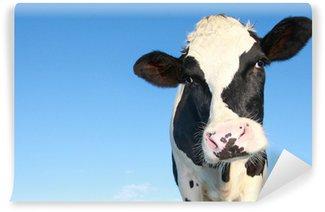Vinyl Fotobehang Holstein koe tegen de blauwe hemel