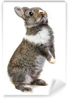 Vinyl Fotobehang Kleine baby konijn