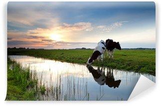 Vinyl Fotobehang Koeien grazen bij zonsondergang
