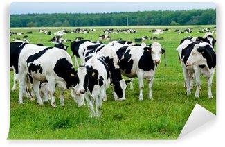 Vinyl Fotobehang Kudde koeien op het weiland