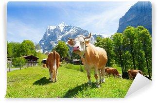 Vinyl Fotobehang Kudde koeien