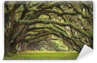 Vinyl Fotobehang Oaks Avenue Charleston SC plantage Live Oak bomen bos